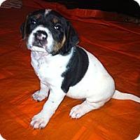 Adopt A Pet :: Angel - Katy, TX