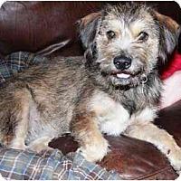 Adopt A Pet :: Jinx - Gilbert, AZ