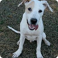 Adopt A Pet :: Boo - Lufkin, TX