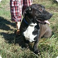 Adopt A Pet :: Hansel - Courtesy listing - Gig Harbor, WA