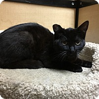 Adopt A Pet :: Midnight - Riverside, CA