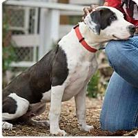 Adopt A Pet :: Tux - Fallbrook, CA