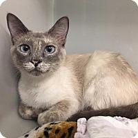 Adopt A Pet :: Salt - St. Charles, MO