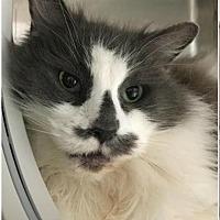 Adopt A Pet :: Molly - Herndon, VA