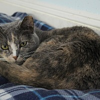 Adopt A Pet :: Jilly - Middletown, NY