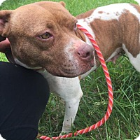 Adopt A Pet :: Arizona - Columbia, MD