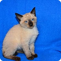 Adopt A Pet :: Khan - Buford, GA
