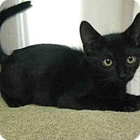 Adopt A Pet :: *OLIVER - Norco, CA