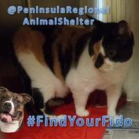 Adopt A Pet :: Ivory - Newport News, VA