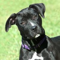 Adopt A Pet :: Grace 2 - Ashland, VA