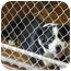 Photo 3 - Border Collie Mix Dog for adoption in Everman, Texas - Bear