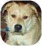 Terrier (Unknown Type, Medium)/American Pit Bull Terrier Mix Dog for adoption in Lake Arrowhead, California - Heinz