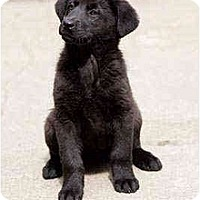Adopt A Pet :: Tulip - Portland, OR