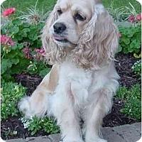 Adopt A Pet :: Gretta - Sugarland, TX