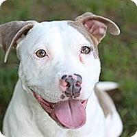 Adopt A Pet :: Matilda - Reisterstown, MD