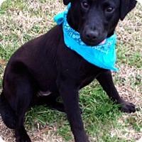 Adopt A Pet :: BRENT - Leland, MS