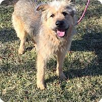 Adopt A Pet :: Dino - Russellville, KY