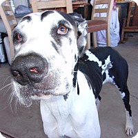Adopt A Pet :: Marley - Arenas Valley, NM