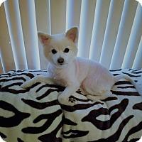 Adopt A Pet :: Qtip - conroe, TX
