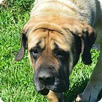 Adopt A Pet :: Amber - Prole, IA