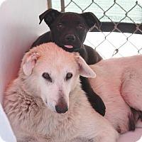 Adopt A Pet :: Secret - Jewett City, CT