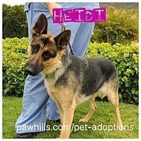 Adopt A Pet :: Heidi - Agoura Hills, CA
