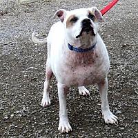 Adopt A Pet :: Titus - Indiana, PA