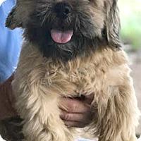 Adopt A Pet :: Bailey - Boulder, CO