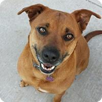 Adopt A Pet :: Pumpkin RR - Guthrie, OK