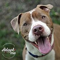 Adopt A Pet :: Grover - Lyons, NY