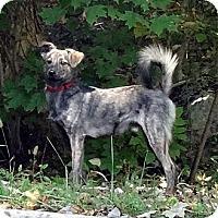 Adopt A Pet :: Keno - Byrdstown, TN