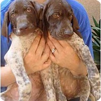 Adopt A Pet :: Laverne and Shirley - Fowler, CA