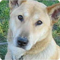 Adopt A Pet :: Cody - (CL) - Marysville, CA