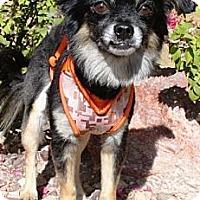 Adopt A Pet :: Zillo - Gilbert, AZ