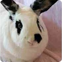 Adopt A Pet :: Edward - Huntsville, AL