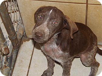 Irish Setter Mix Puppy for adoption in Thomaston, Georgia - Glenda