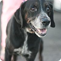 Adopt A Pet :: Kai - Canoga Park, CA
