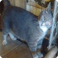 Adopt A Pet :: Simba - Charlotte, NC