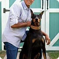 Adopt A Pet :: Malachi - Fillmore, CA