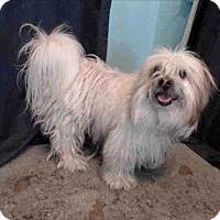 Adopt A Pet :: Dae Dae - Encino, CA