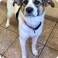 Adopt A Pet :: Francie 109234 - Joplin, MO