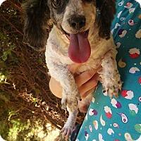 Adopt A Pet :: Medicine Man - Crump, TN