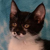 Adopt A Pet :: Heather - Eureka, CA