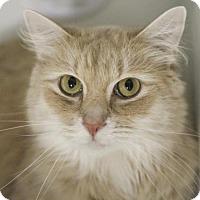 Adopt A Pet :: Wyatt Sands - Marlborough, MA