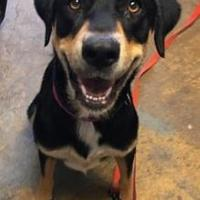 Adopt A Pet :: Sophie - Brownwood, TX