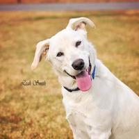 Adopt A Pet :: Charlie - Greenville, KY
