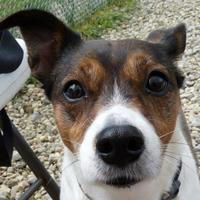Adopt A Pet :: Teavana - Valley View, OH