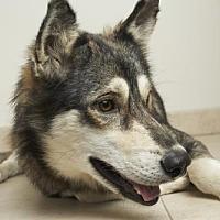 Adopt A Pet :: Altoona D171809: NO LONGER ACCEPTING APPLICATIONS - Eden Prairie, MN