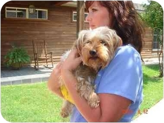 Yorkie, Yorkshire Terrier Dog for adoption in Baton Rouge, Louisiana - Chase