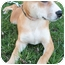 Photo 1 - Shar Pei/Boxer Mix Puppy for adoption in Struthers, Ohio - Thor